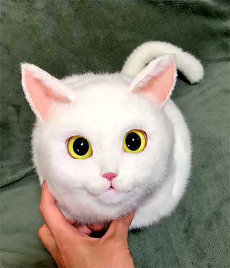 Pico Cat Bag