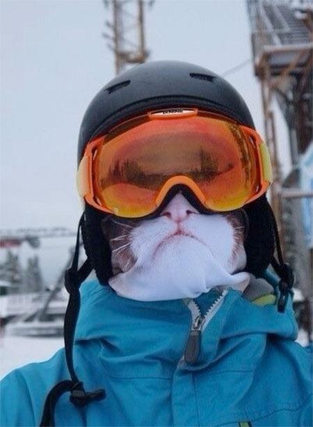 Cat Face Ski Mask