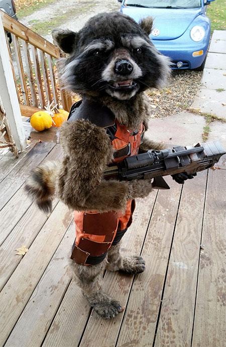 Rocket Raccoon Halloween Costume