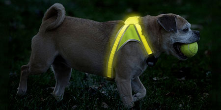 Illuminated Dog Vest