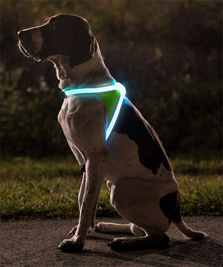 Noxgear LightHound