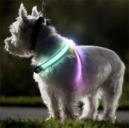 LED Dog Vest