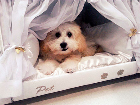 Mattress Dog Bed