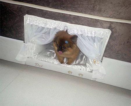 Colchao Inteligente Postural Bed Frame