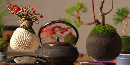 Levitating Bonsai Trees