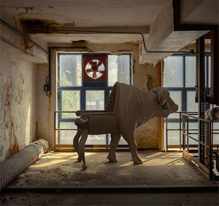 Buffalo Chair