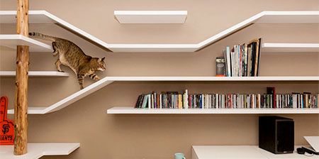 Cat Bookshelves