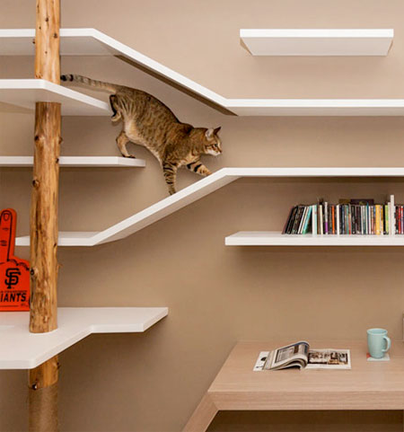 Cat Shelves Playground