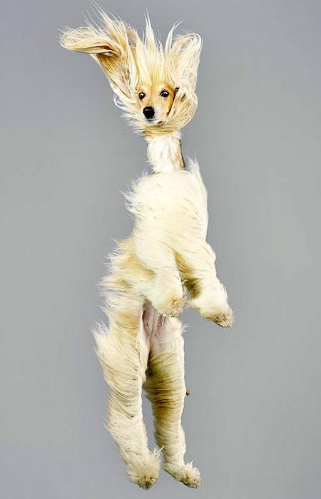 Falling Dogs