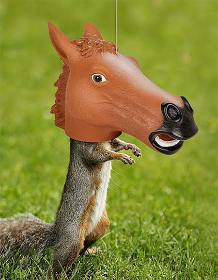 Horse Squirrel