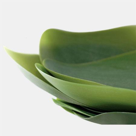 Nao Tamura Leaf Plates