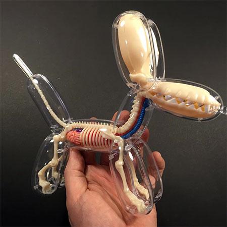 Jason Freeny Anatomical