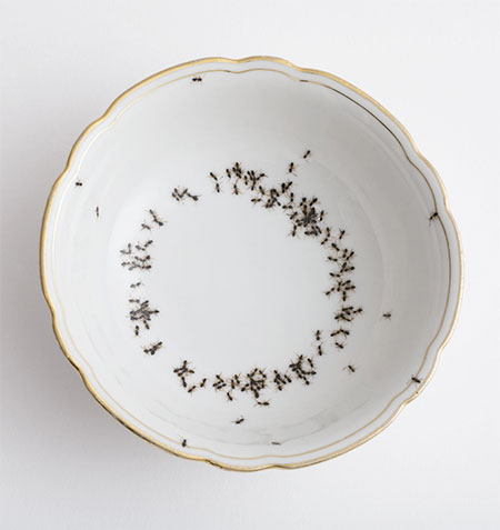 Evelyn Bracklow Porcelain Covered with Ants