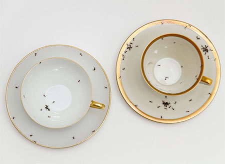 Evelyn Bracklow Vintage Porcelain Covered with Ants