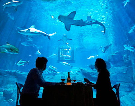 Airbnb Aquarium Bedroom