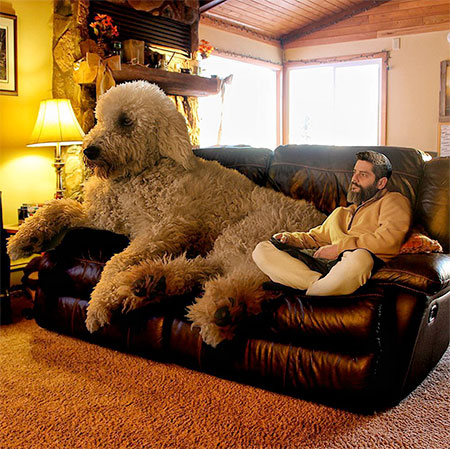 Christopher Cline Giant Dog