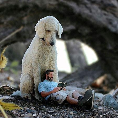 Christopher Cline Large Dog