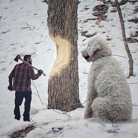 Giant Dog Instagram