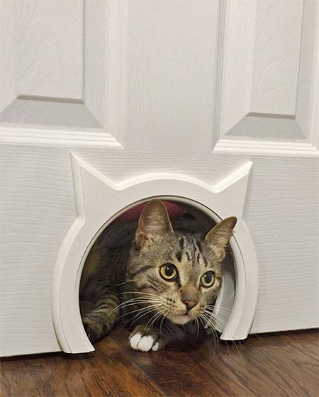 Door for Cats