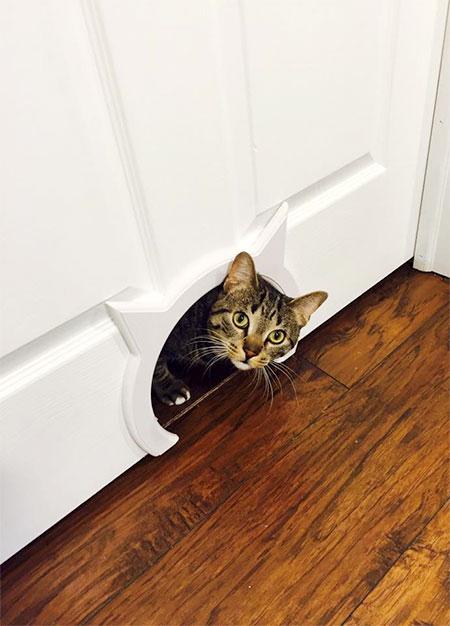 Kitty Pass
