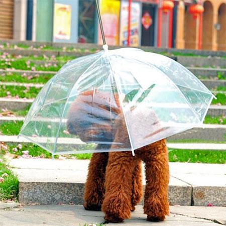 Petbrella
