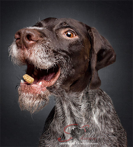 Dogs Catch Treats