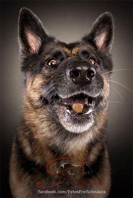 Christian Vieler Dogs