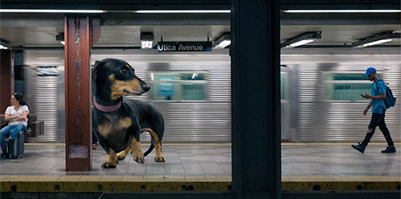 Giant Dog in Brooklyn
