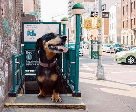 Giant Dog in New York