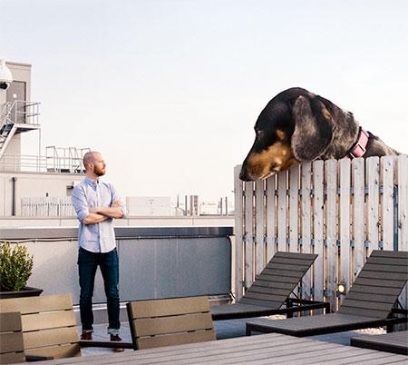 Giant Wiener Dog