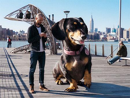Mitch Boyer Giant Dog