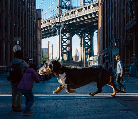 Mitch Boyer Dog