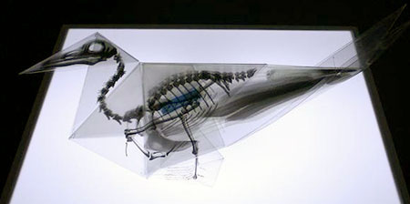 X-Ray Origami