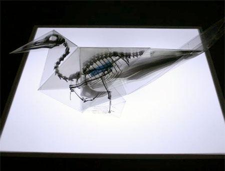 X-Ray Origami Birds