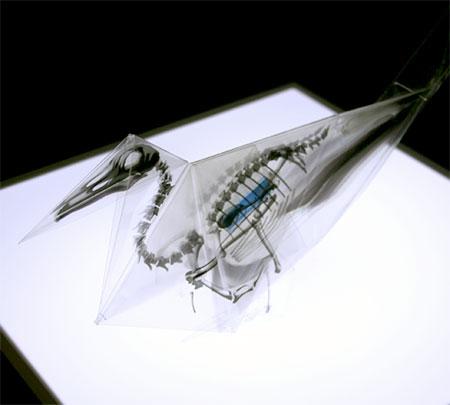X-Ray Origami Bird