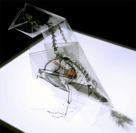 Japanese Artist Takayuki Hori