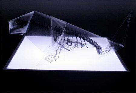 Takayuki Hori X-Ray Origami Birds