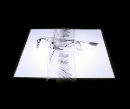 Takayuki Hori X-Ray Origami Bird