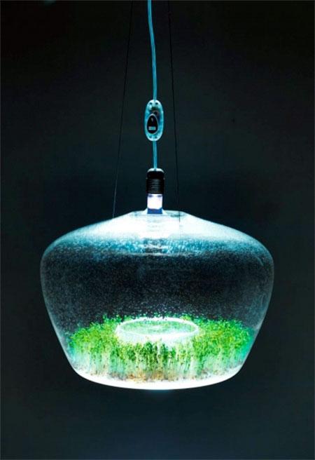 Kristyna Pojerova Greenhouse Lamp