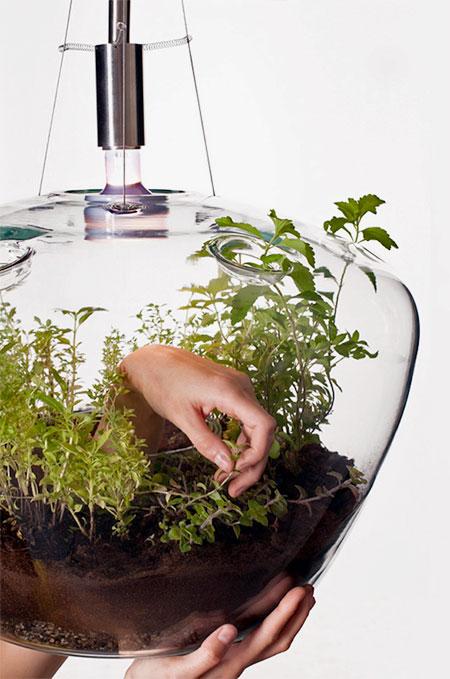 Kristyna Pojerova Greenhouse