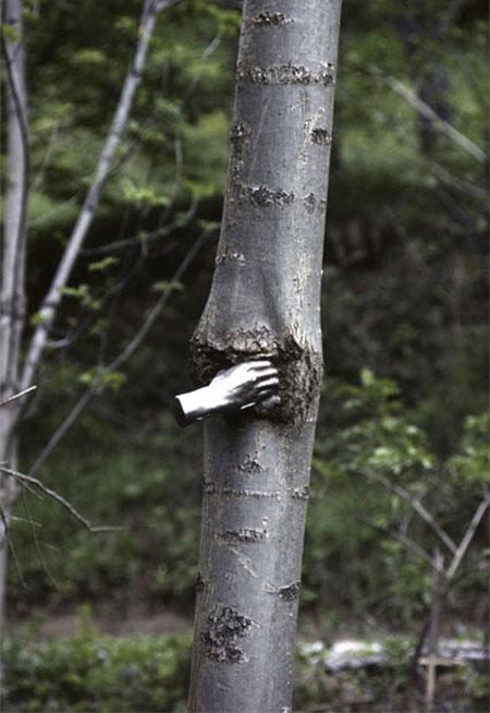 Giuseppe Penone Tree Hand