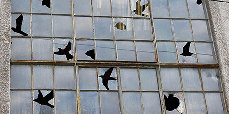 Broken Window Birds