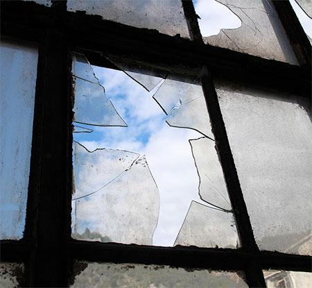 Broken Window Bird