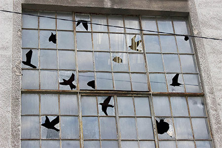 Broken Windows Street Art