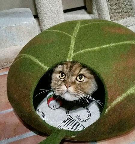 Leaf Shaped Cat Bed