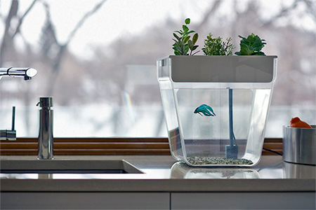 Self-Cleaning Fish Tank