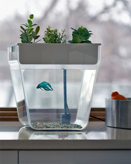 Self-Cleaning Fishtank