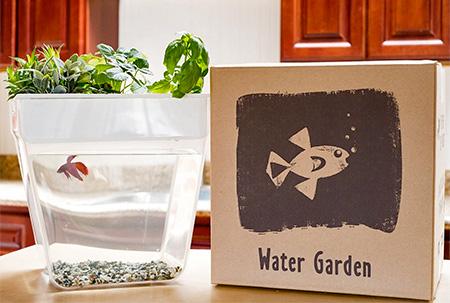 Garden Fishtank