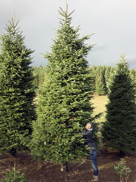 Aidan Walters Christmas Tree