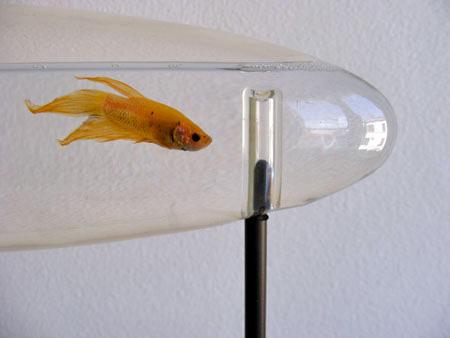 Glass Tube Aquarium